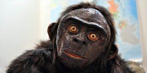 Obývají odlehlá místa Bornea kříženci člověka a opice?