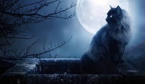 Kočka: Tajemný přítel na hranici světů: Díl 3.