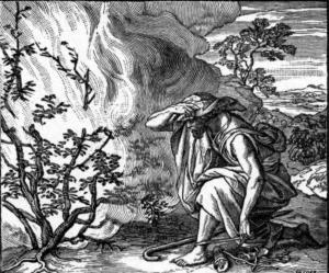Záhada Mojžíšova hořícího keře