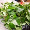 Hot Leaf Uziza