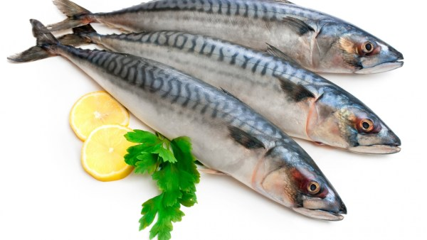 Mackerell Fish