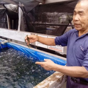 海ブドウの養殖場見学【沖縄】平安座のご主人が親切過ぎた。たらふく試食も出来る。