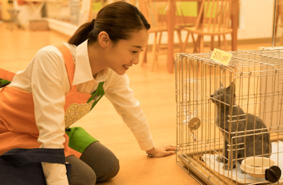 【みんなの口コミ】映画『猫は抱くもの』の感想評価評判
