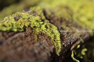 Moss in Macro