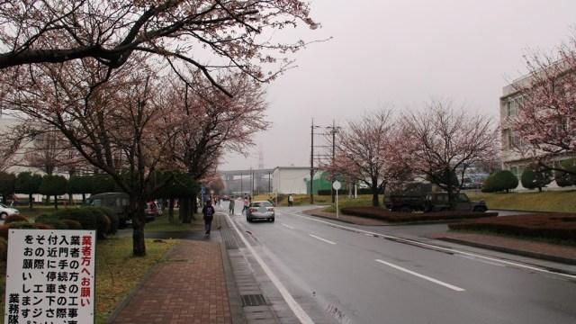 駒門駐屯地創立56周年記念 桜3分咲き