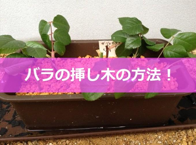 バラの挿し木方法