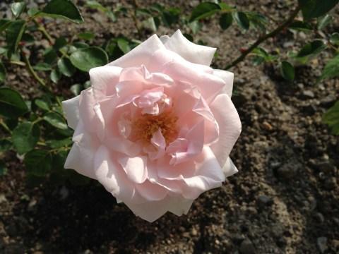 ニュードーンのお花アップ02