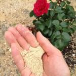 うどん粉予防に米ぬかを撒きました