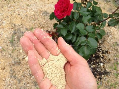 うどん粉に米ぬか1