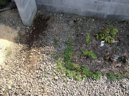 堆肥作り01