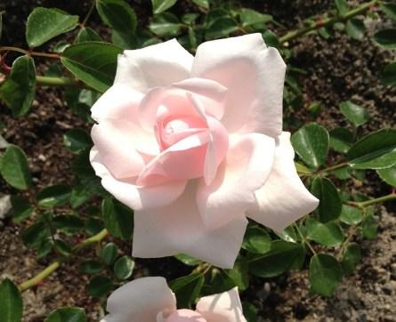 ニュードーンのお花アップ03