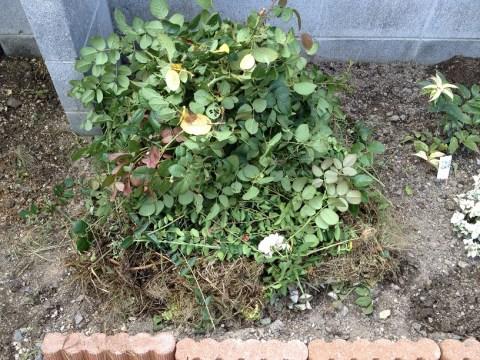 8さらにバラの剪定枝をセット