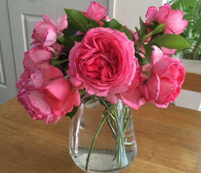 ラ・ローズ・ドゥ・モリナールを花瓶に活けた
