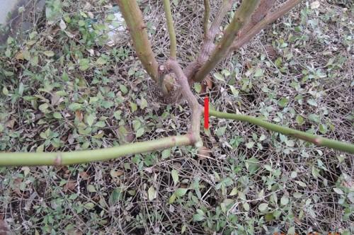 細めの枝を切る2