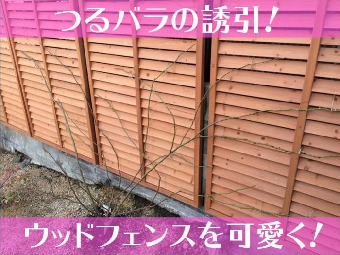 つるバラの誘引!ウッドフェンスを可愛く!-01
