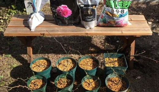 バラの肥料対決!手作りvs有機vs化成肥料の完結編♪