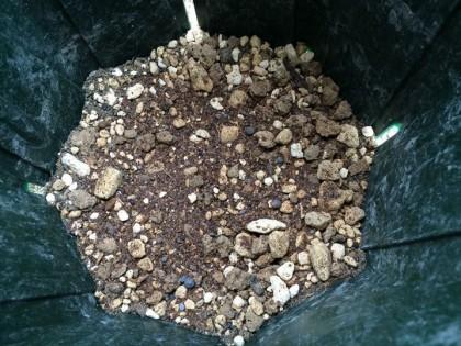 肥料を鉢底に