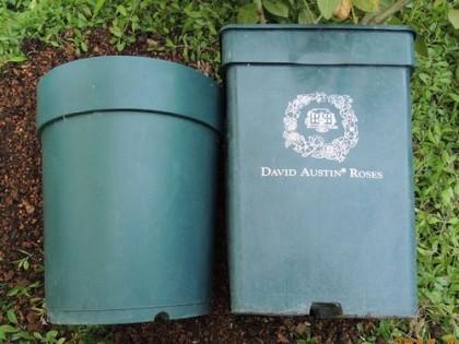 鉢のサイズの比較