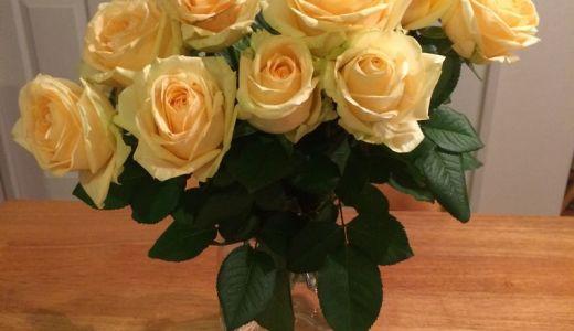 薔薇の挿し木を切り花品種で!成功率が高くて簡単な方法!