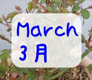 バラの育て方!3月にやることは?
