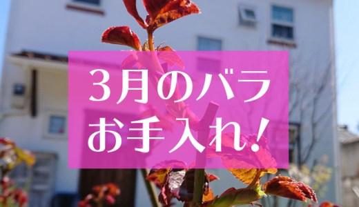 バラの育て方♪3月のお手入れ方法!