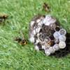 アシナガバチに刺された&巣を駆除したレビューです(笑)