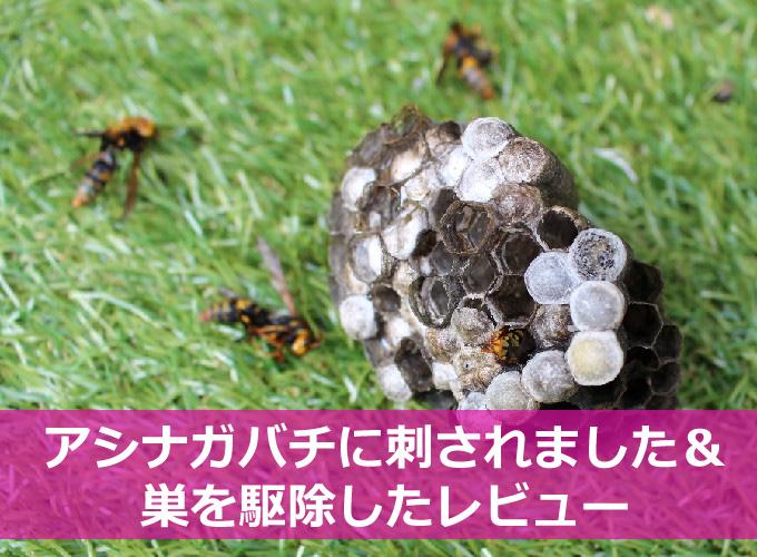 アシナガバチに刺された&駆除の方法-01