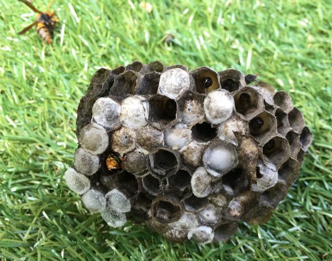 蜂の巣の内部
