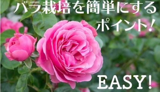 バラ栽培!簡単にするポイントを5つ!