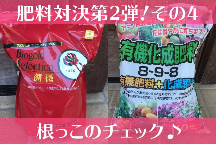 バイオゴールドセレクション薔薇の肥料対決2の4