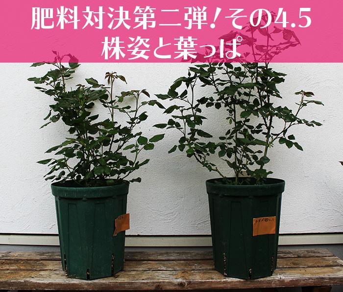 肥料対決第二弾その4.5-01