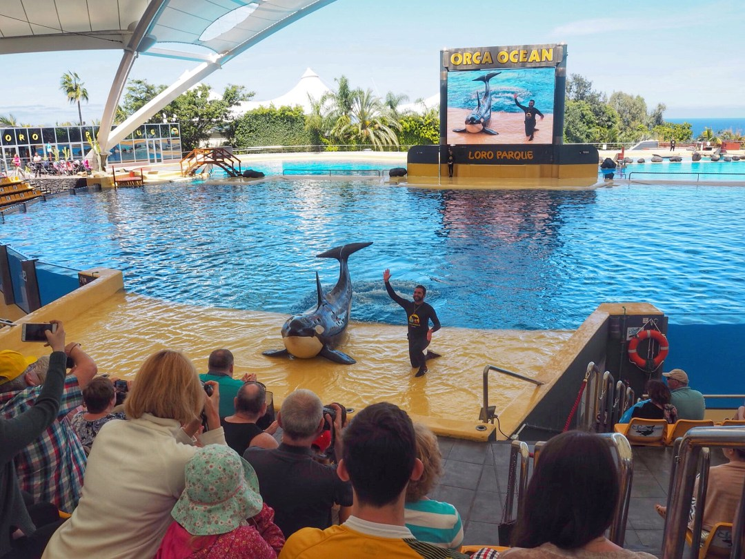 Loro Parque Zoo Whales Enjoy the Adventure