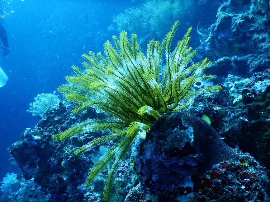 Simply Scuba Diving - Enjoy the Adventure
