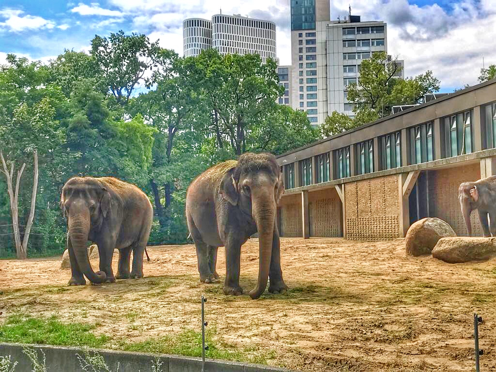 Elephants Berlin Zoo - Enjoy the Adventure