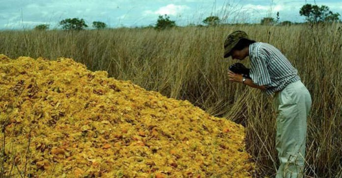 Orange peels dumped in National Park Costa Rica