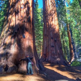 No__lortego10__you_can_t_take_the_giant_sequoia_home_with_us.__treehugger__sequoianationalpark__ortegosincali