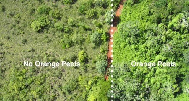 Orange Peels Arial Shot2