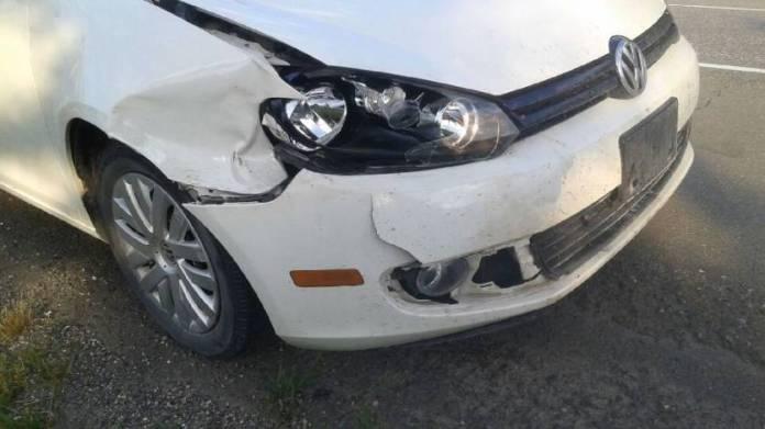 bear hit by car Banff Canada