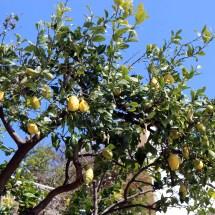 travel-italy-positano-lemons