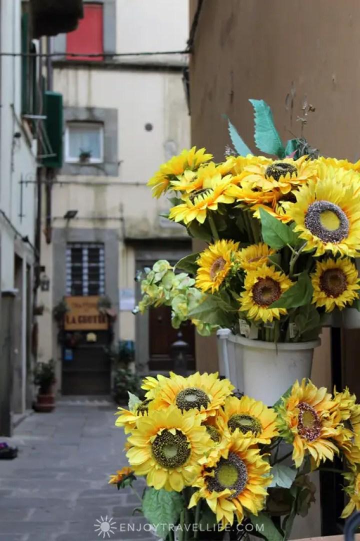 Sunflowers | Cortona | Italy | Tuscany