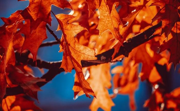 Høsten, med flanell, tweed og cord er tilbake