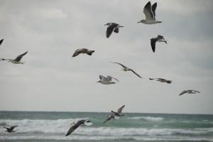 Baie d'Audierne - PF photo perso - DSC_0333