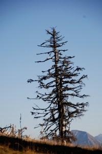 montée au Semnoz le 11 novembre 2011 à 16h 43 - DSC_0228