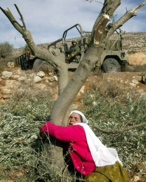 femme palestinienne essayant de protéger ses oliviers - Saed Bannoura