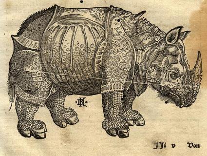 rhinoceros-dr