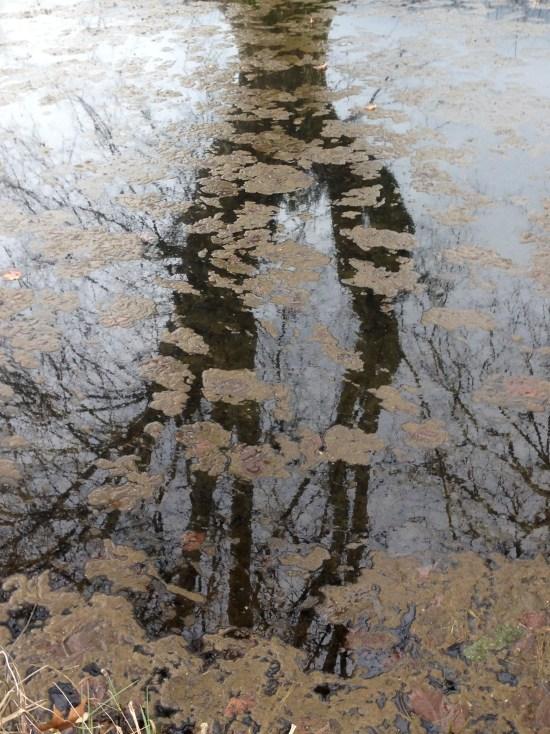 Impressions - Reflets – photo Enki, mercredi 17 février 2016 (IMG_5698)