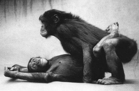 bonobos-vs-hommes
