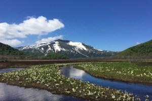 尾瀬の水芭蕉と燧ヶ岳の風景