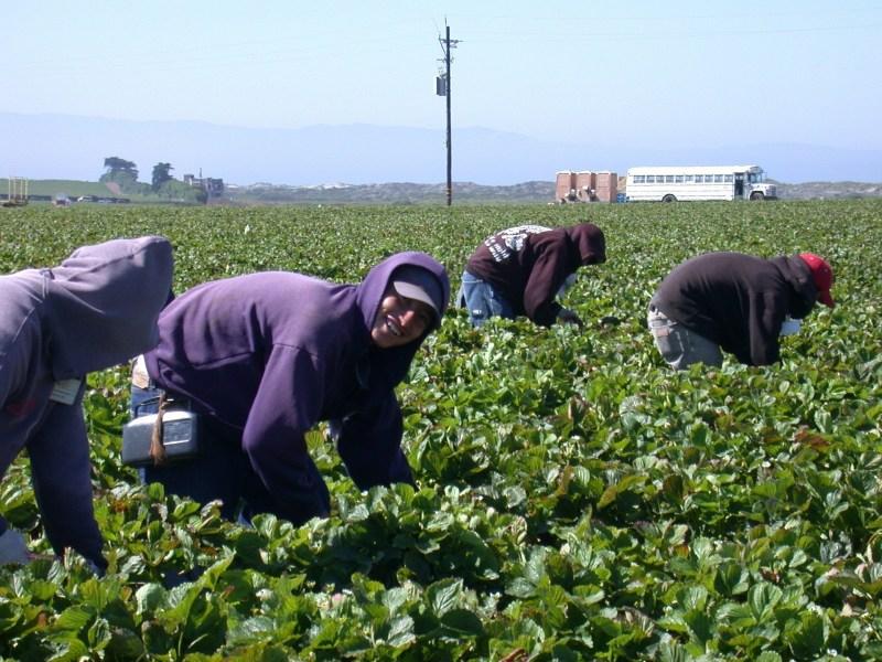 mascarillas para trabajadores agrícolas