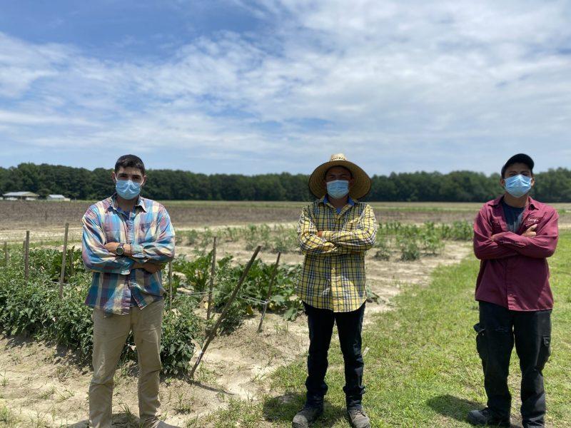trabajadores de granja de árboles navideños en Sparta
